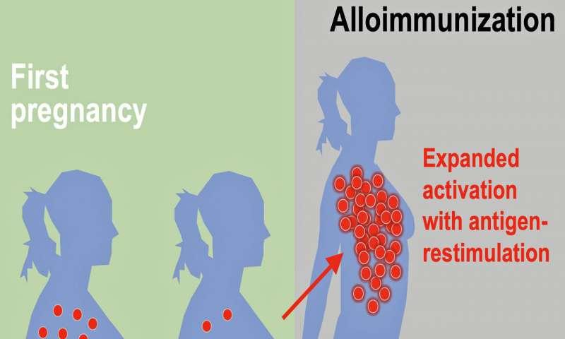 Имунната система реагира различно между първата и по-късната бременност